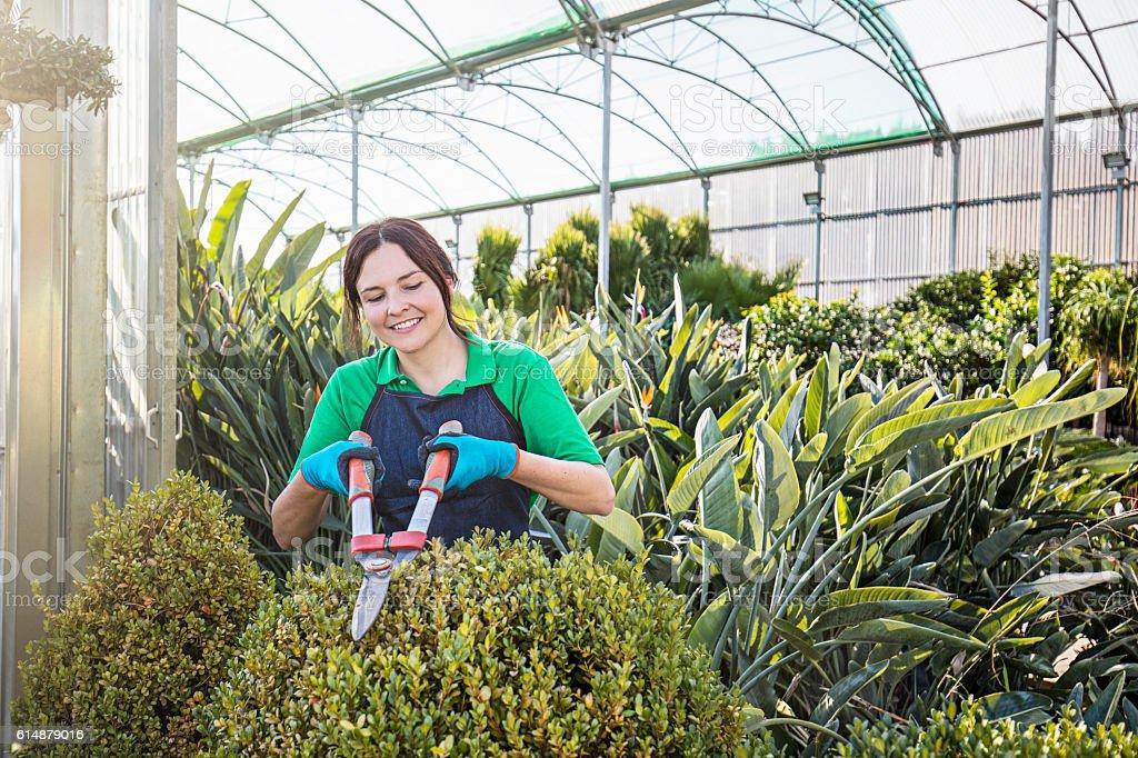Female gardener working at greenhouse stock photo