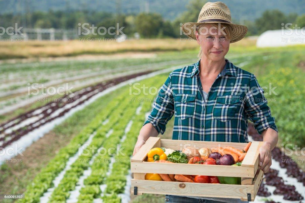 Female Gardner With Fresh Vegetable Box stock photo