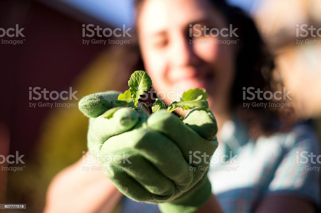 Female gloved hands holding a young plant stock photo