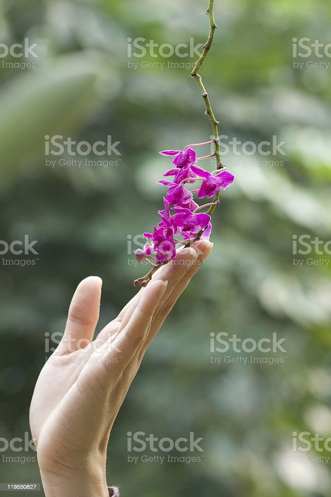 female hand and flowers royalty-free stock photo