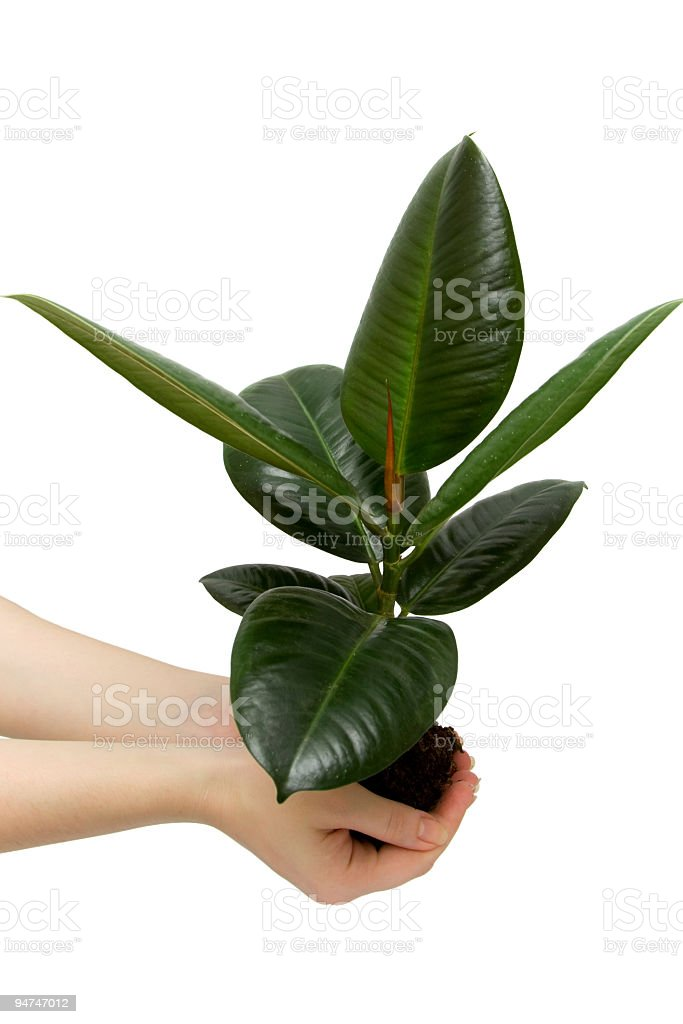 female hand holding the small plant stock photo