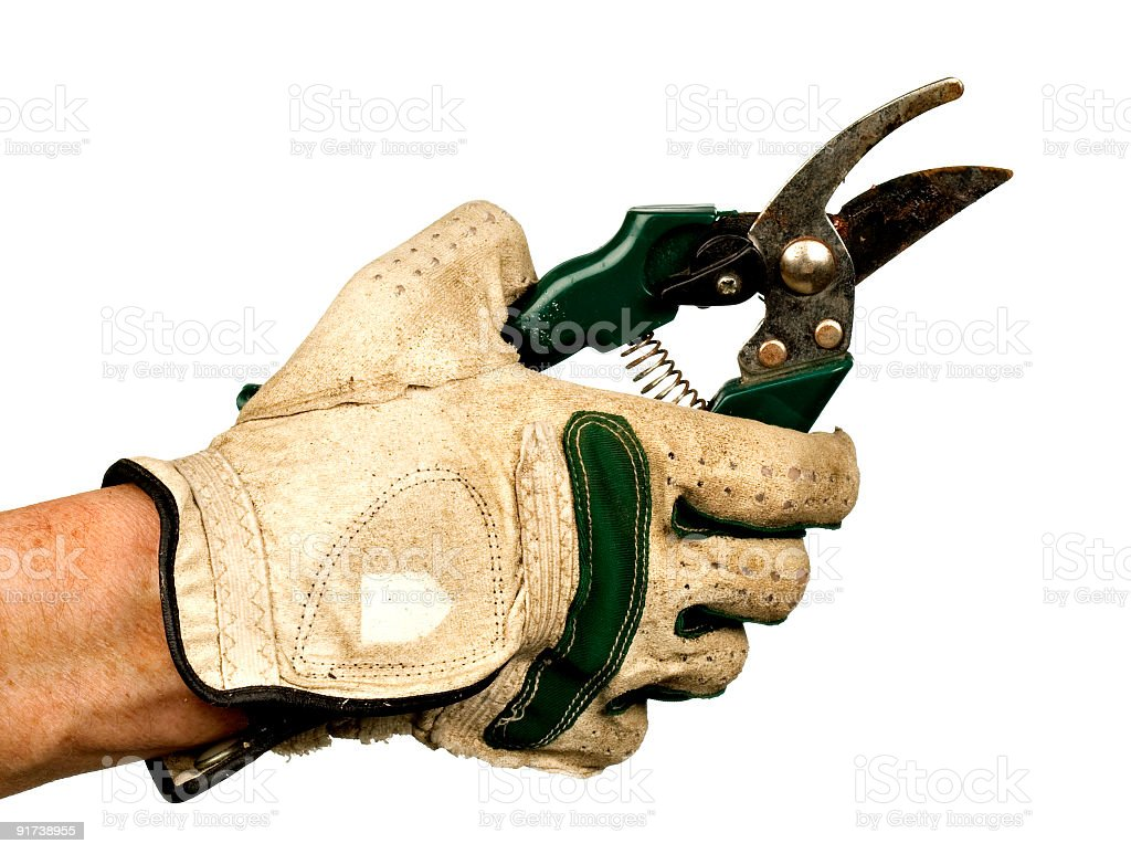 Female hand in gardening glove holding pruning shears. royalty-free stock photo