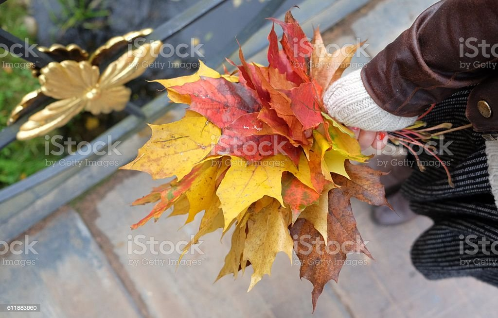 Female hand with colorful bouquet of autumn leaves. stock photo