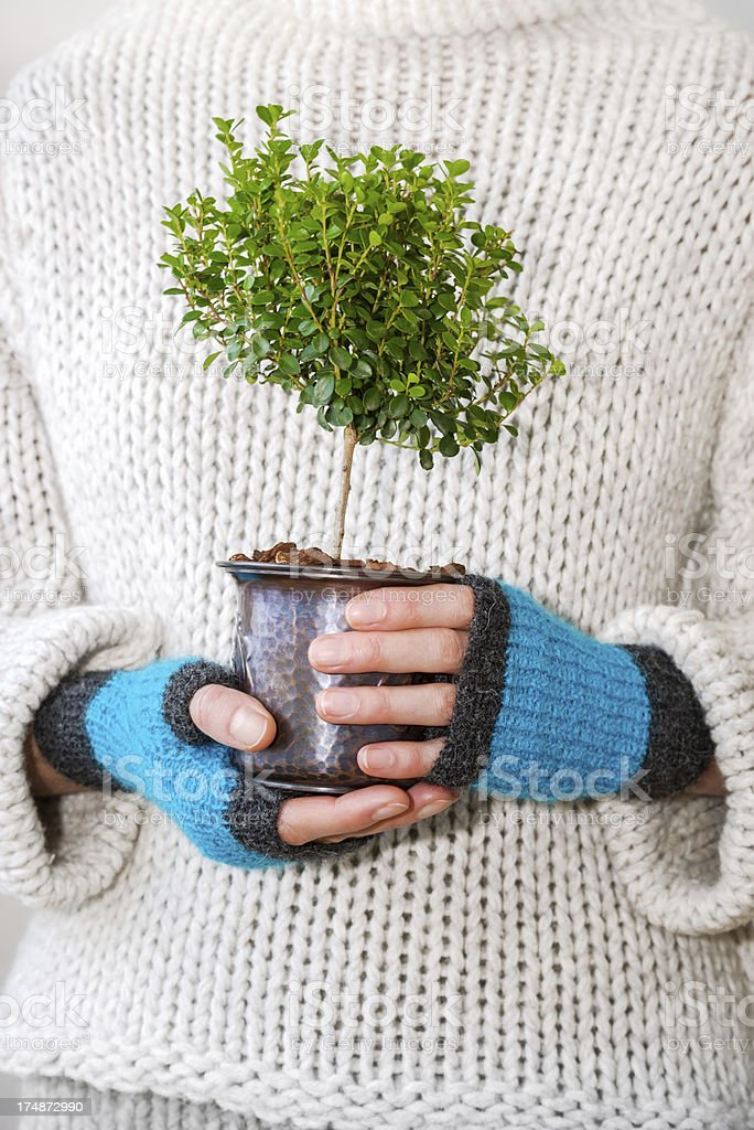 Female hands holding a little tree royalty-free stock photo