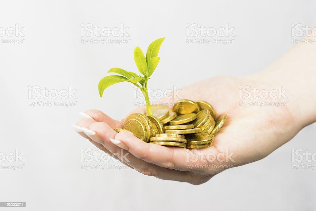 Fêmea Mãos segurando moedas e pequenas plantas foto royalty-free