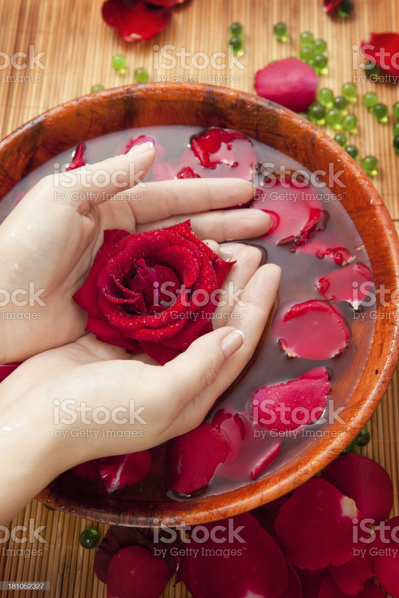 Female Hands  in Bowl of Water with Red  Roses royalty-free stock photo