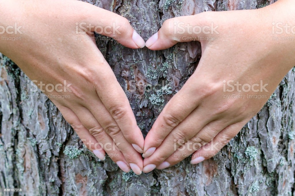 Female hands making heart shape on the background of a tree trunk stock photo