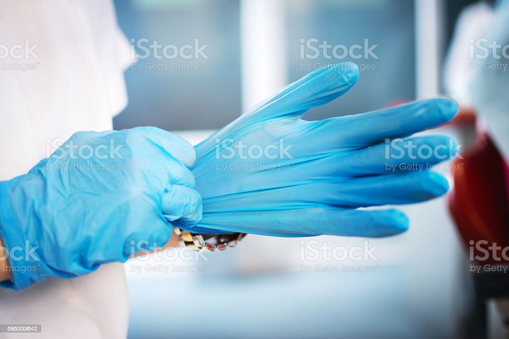 Female hands putting on blue sterilized surgical gloves. stock photo