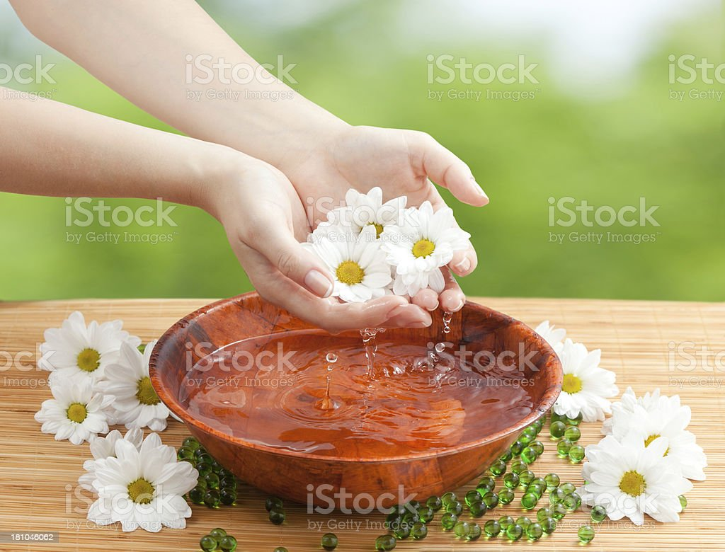 Female Hands with Drops of Water and Chamomiles royalty-free stock photo