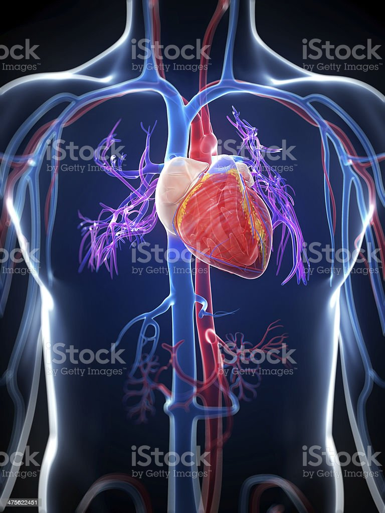 female heart stock photo