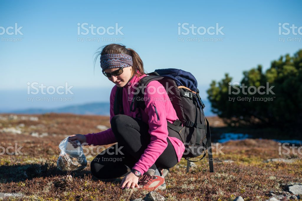 Female hiker collecting herbs a sunny day in the mountains stock photo
