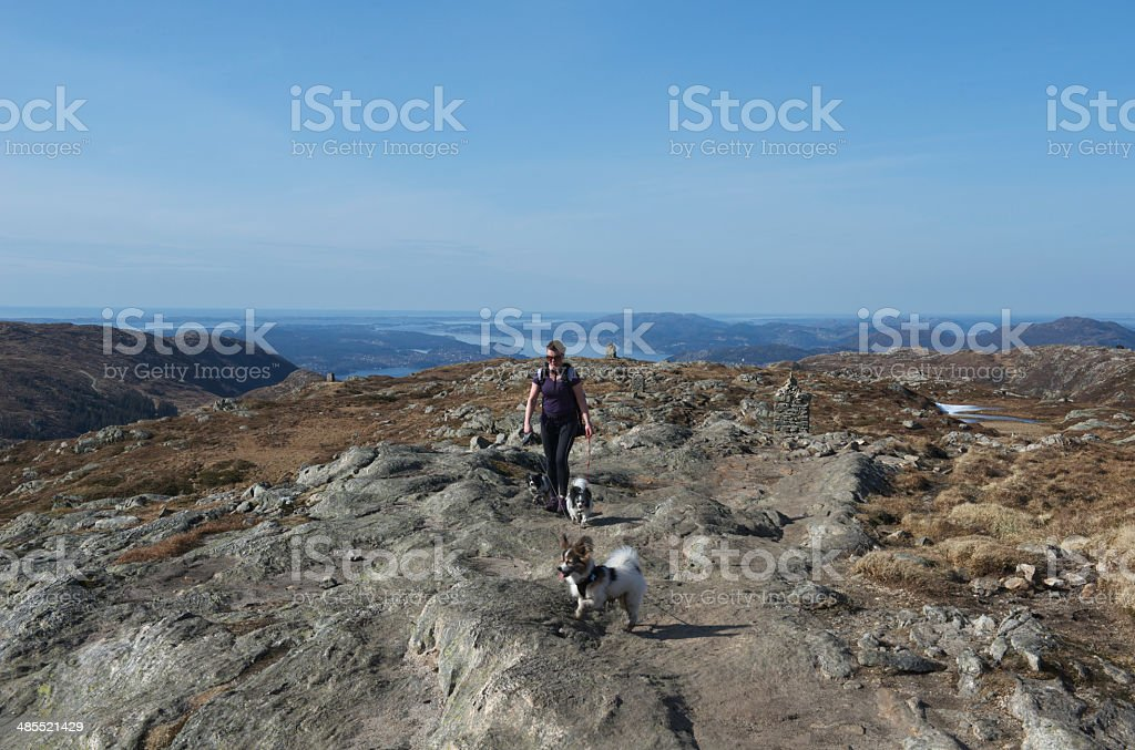 Female hiker with three dogs in mountains of Bergen stock photo