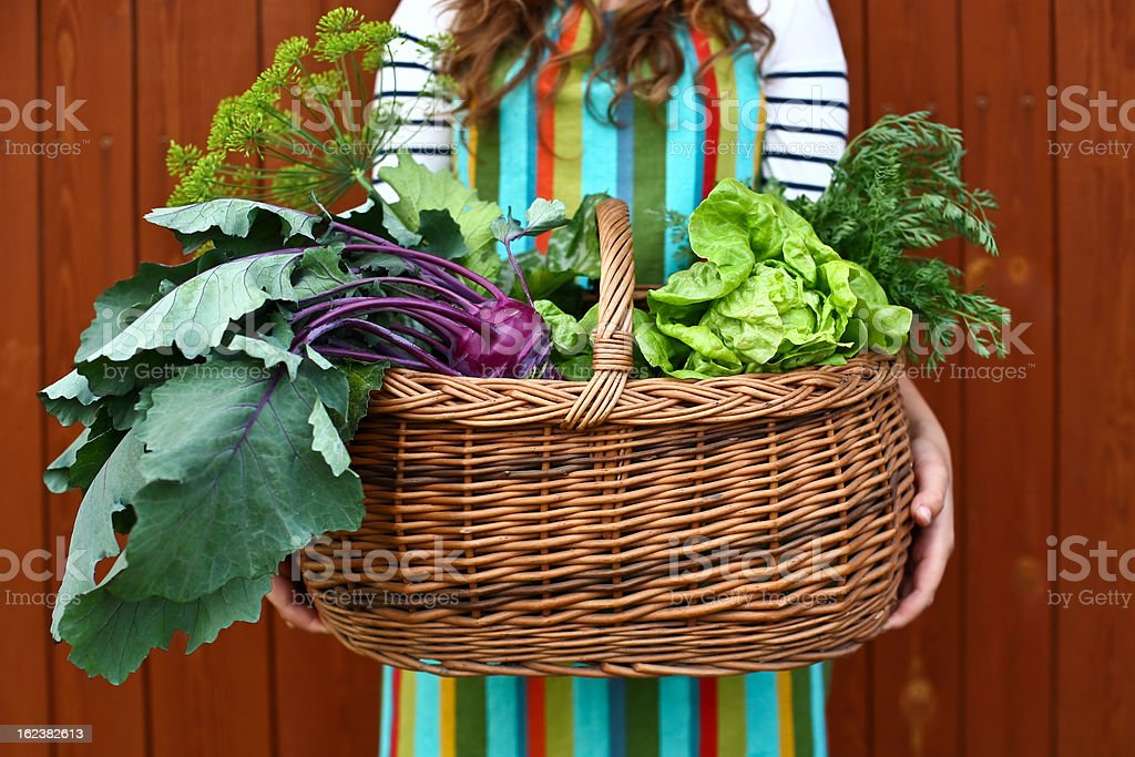 Female holding a wicker basket with freshly pulled vegetables royalty-free stock photo