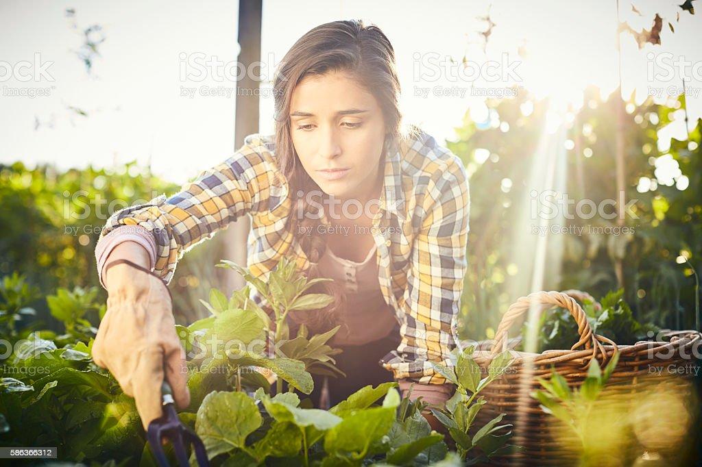 Female holding gardening fork harvesting vegetables at organic f stock photo
