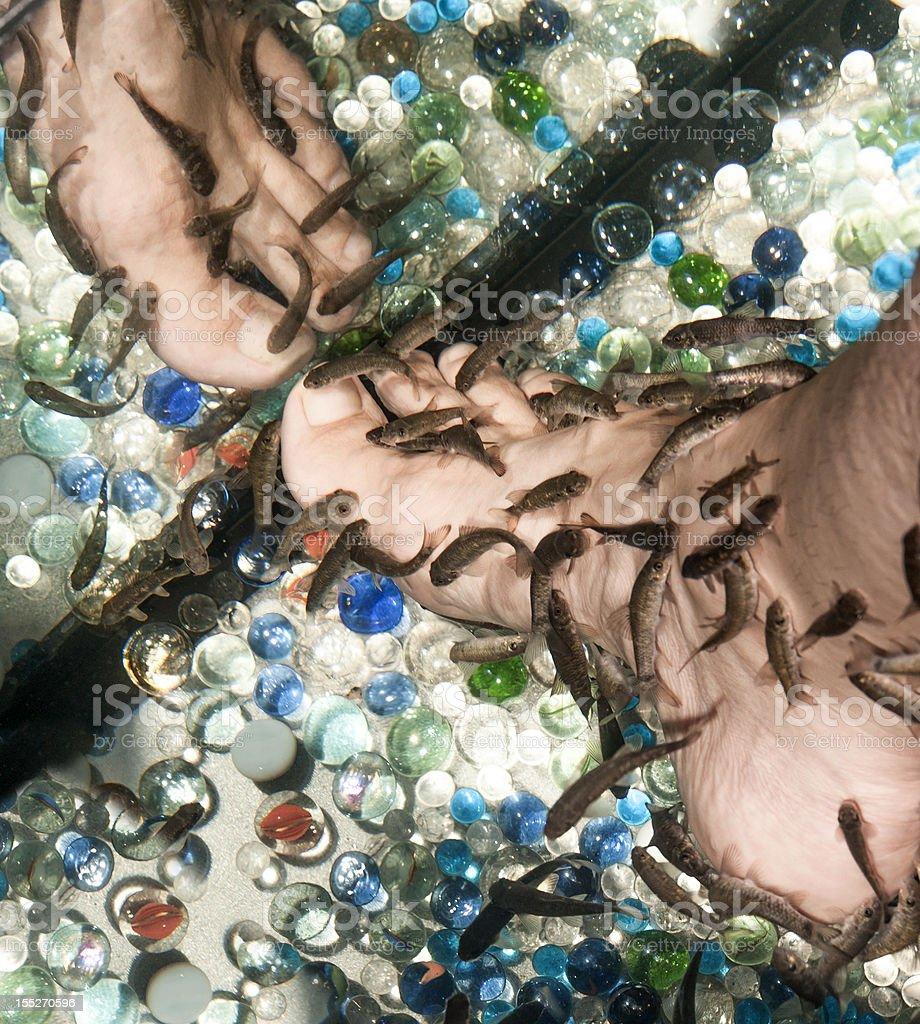 female leg during pedicure fish garra rufa stock photo