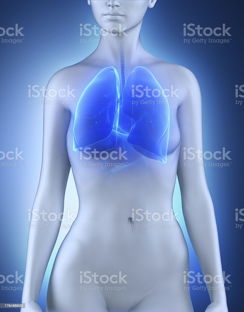 Female lungs respiratory system anatomy royalty-free stock photo