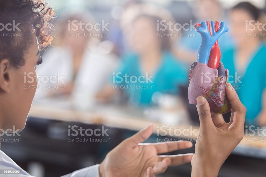 Female medical school professor with human heart model stock photo