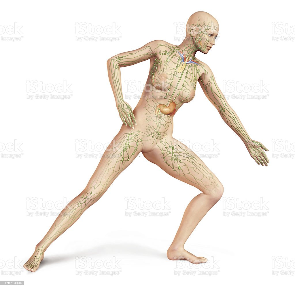 Female naked body, with full Lymphatic system superimposed. Anatomy image. royalty-free stock photo