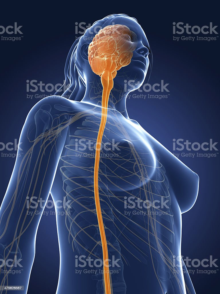 female nerves and brain royalty-free stock photo