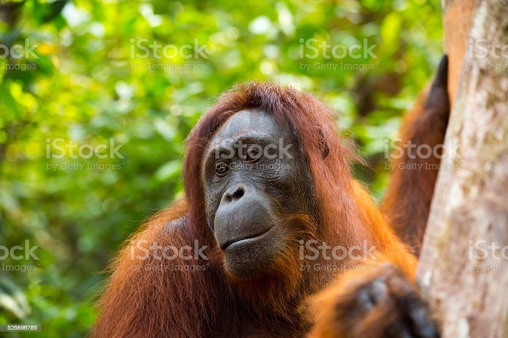 Kalimantan National Park Tours, explore the wildlife and beauty of ...