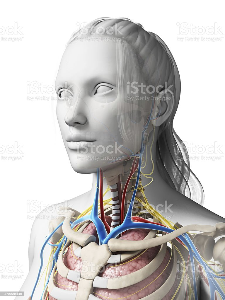 female organs stock photo