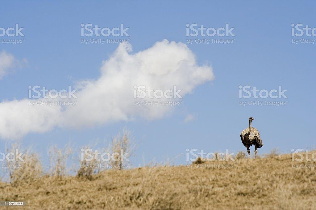 Femme regardant par-dessus les collines d'autruche photo libre de droits