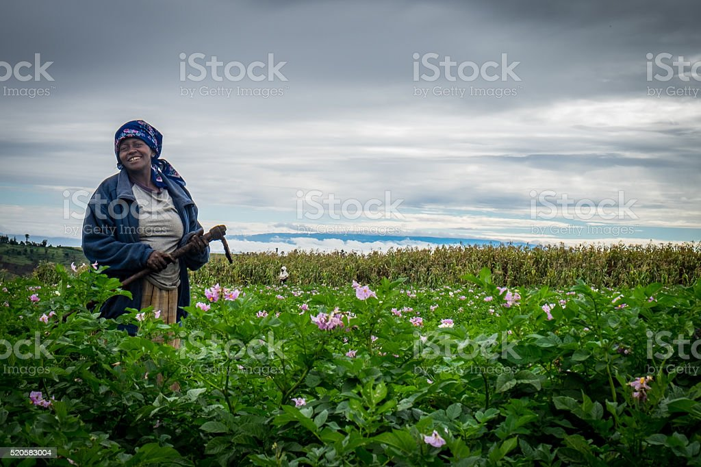 Female Potatoe Farmer in Kenya stock photo
