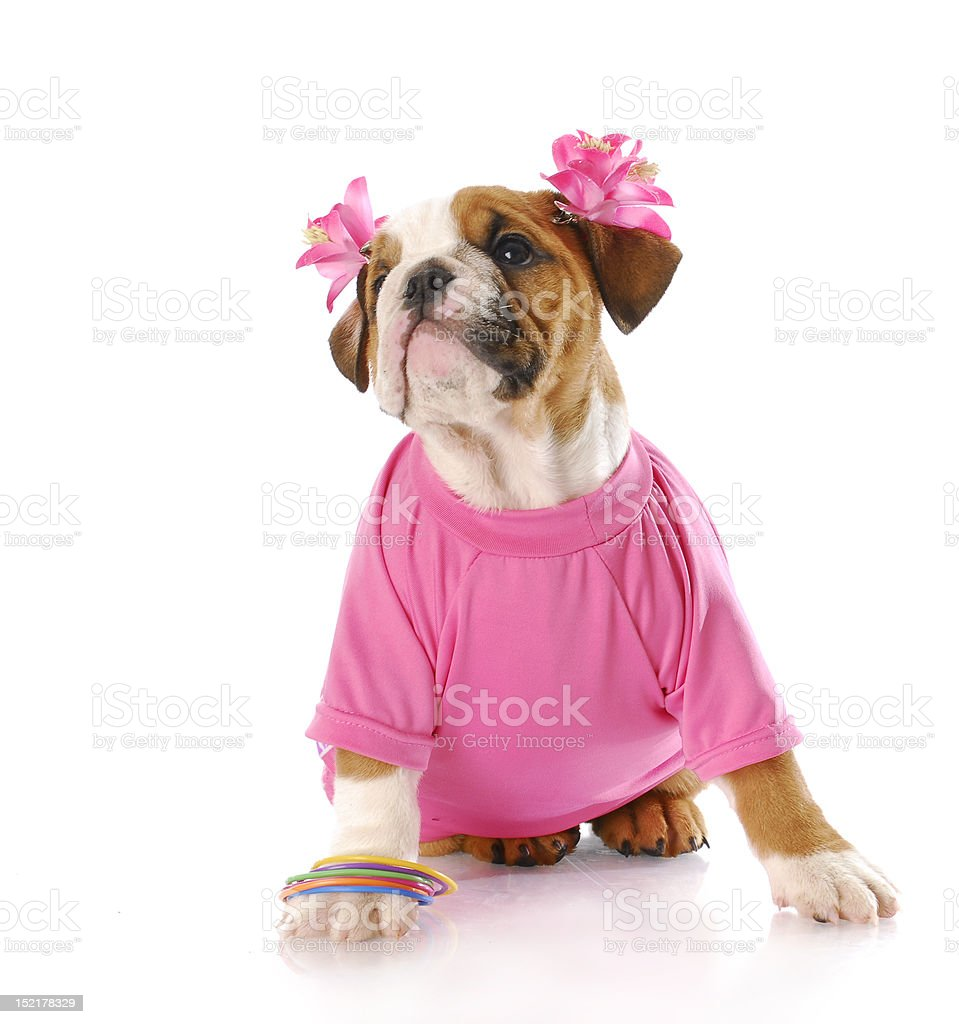 female puppy royalty-free stock photo