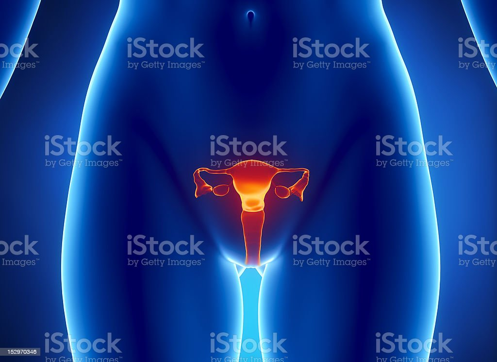 Female REPRODUCTIVE system x-ray view stock photo