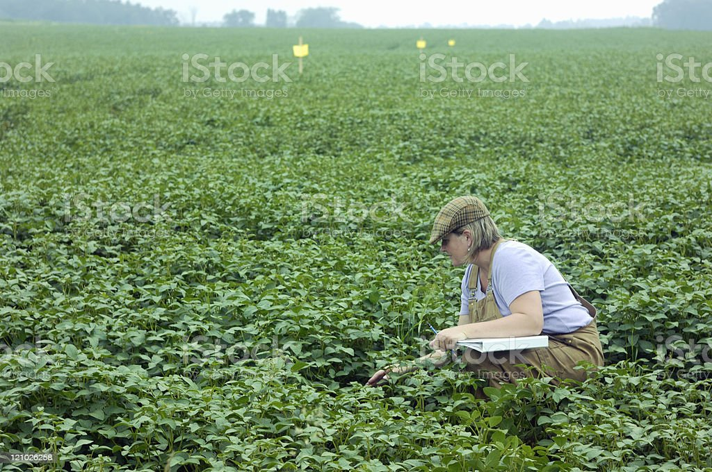 Female research technician inspecting crop variety stock photo