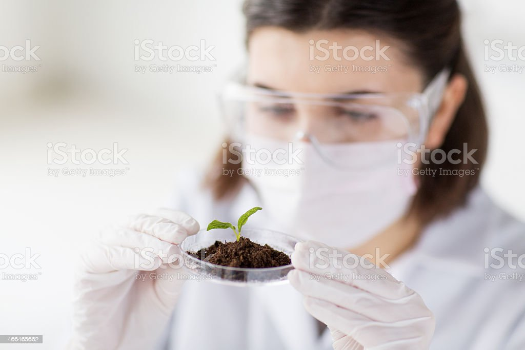 Female scientist analyzing plant and soil in the laboratory stock photo