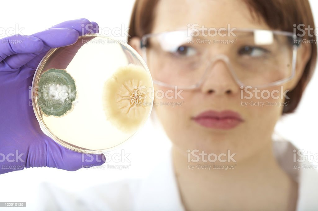 female scientist have a close look at petri dish, bacterium royalty-free stock photo