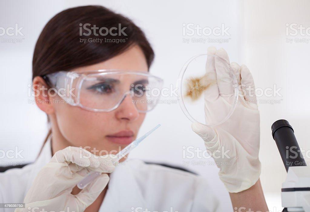 Female Scientist Looking At Petridish stock photo