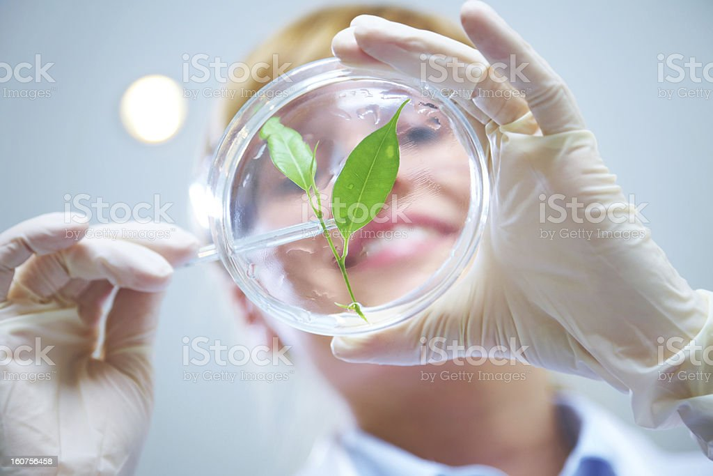 Female scientist of biotechnology stock photo
