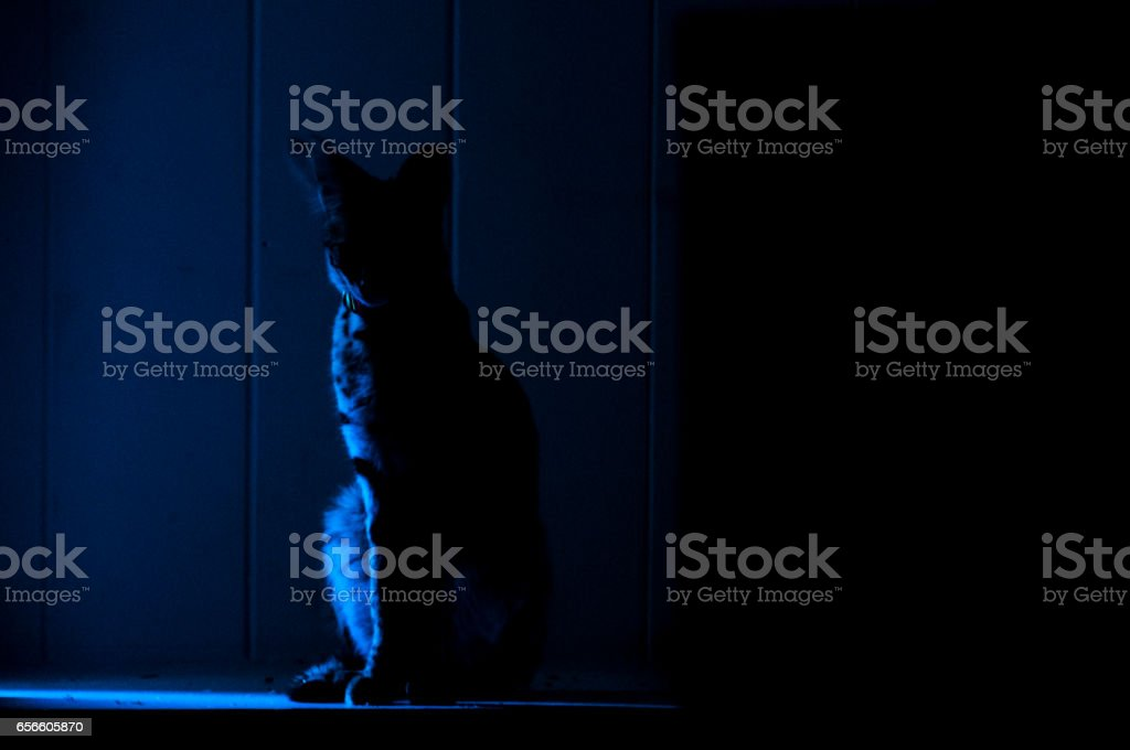 Female serval cat (leptailurus serval) in shadowy alcove. stock photo