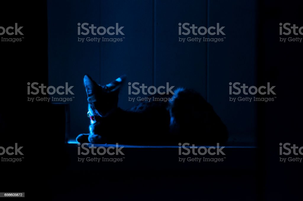 Female serval cat (leptailurus serval) lies in shadowy alcove. stock photo