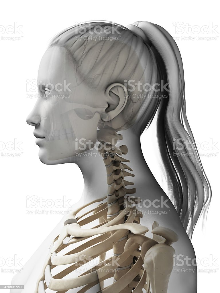 female skeleton - neck stock photo