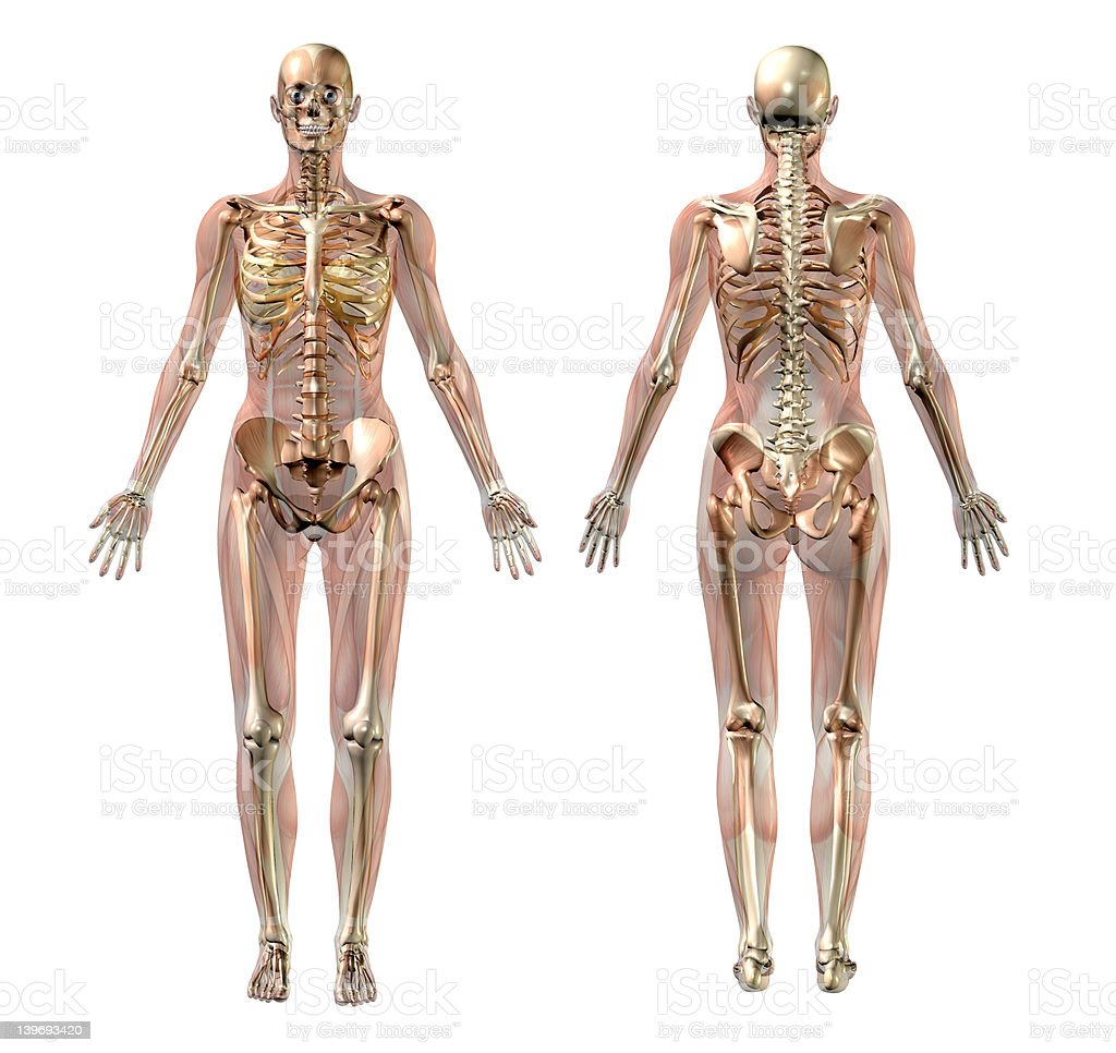 female skeleton pictures, images and stock photos - istock, Skeleton