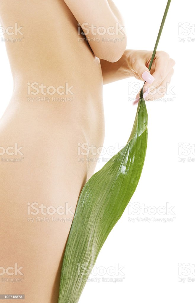 female torso with green leaf over white stock photo