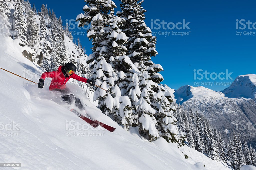 Female tree skiing fresh powder stock photo
