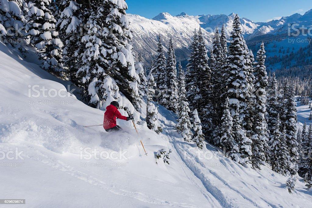 Female tree skiing fresh powder stock photo