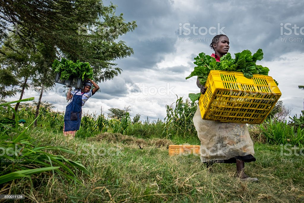 Female vegetable farmers stock photo