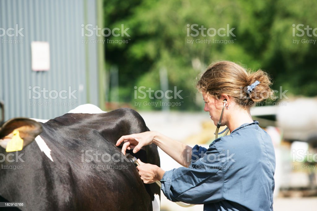 Female veterinarian at work royalty-free stock photo