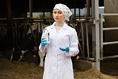 Female veterinarian  in cowshed