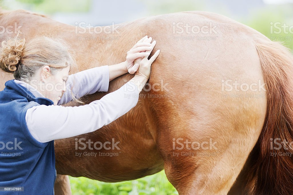 Female veterinarian performing chiropractics royalty-free stock photo