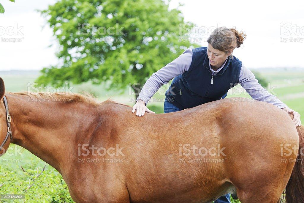 Female veterinarian performing chiropractics royalty-free stock photo