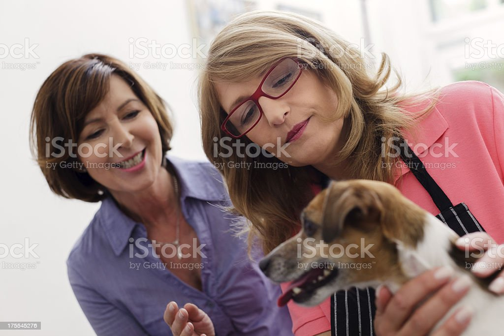 Female with stethoscope examining dog with owner behind. stock photo