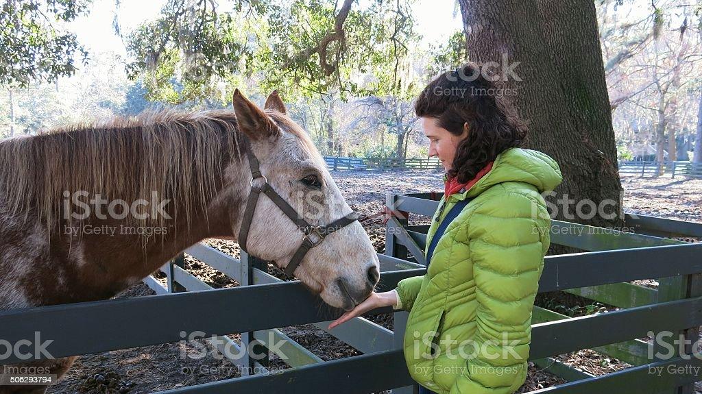 Female woman Feeding Bridled Brown, White Horse, farm fence stock photo