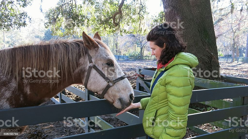 Female woman Feeding Bridled Brown, White Horse, farm fence stock photo