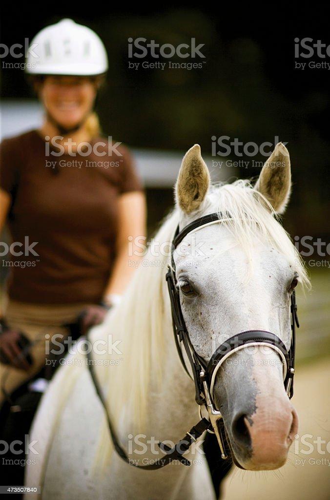 Female woman sitting on white Arabian horse. stock photo
